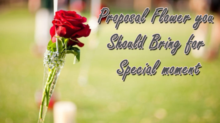 Proposal Flower you should bring for special moment